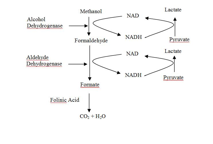 Pharmacology and Toxicology: Treatment of Poisons - Methanol