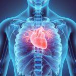 Heart in chest illustration