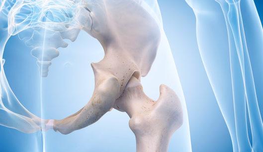 hip bones, human