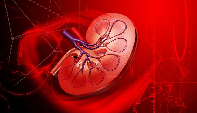 kidney-ckd-0416