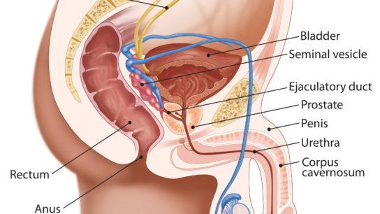 PAE Is a Promising BPH Treatment Alternative