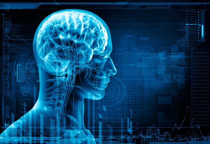 Male Brain illustration