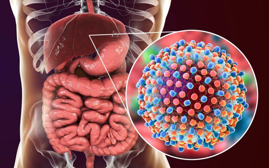 Hepatitis C virus in liver, human body