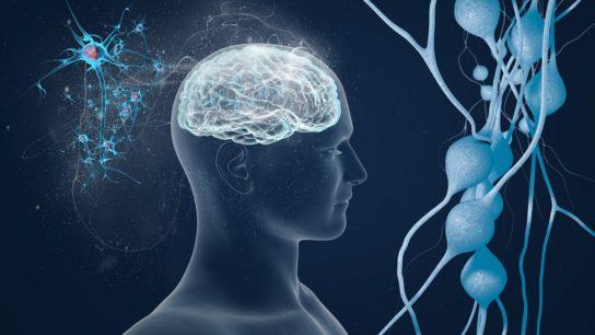 neurocognitive, brain