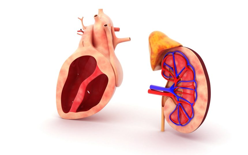 heart and kidney