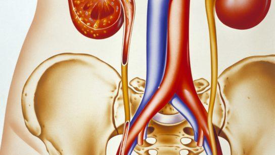 Kidneys and Ureters